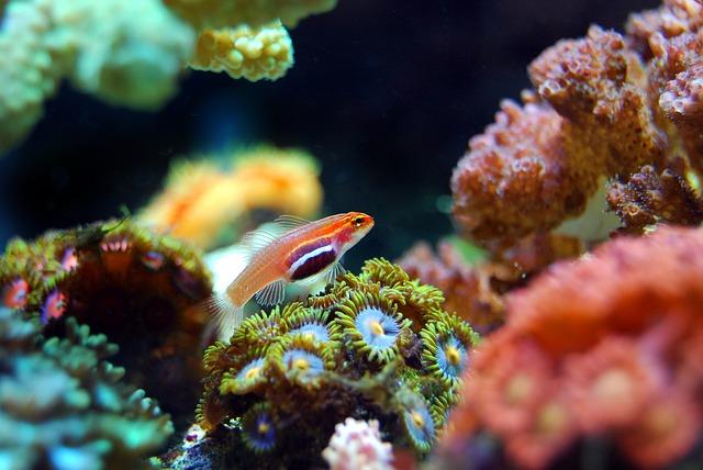 koralový útes